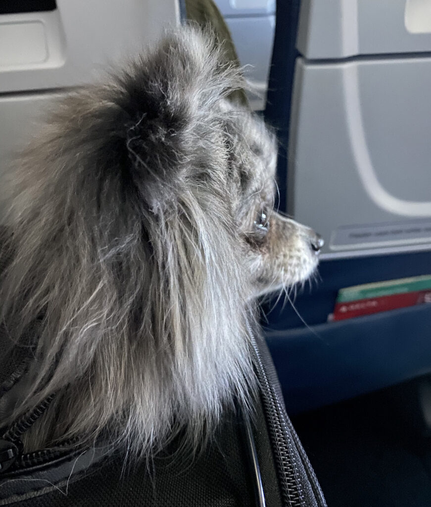 dog on the plane