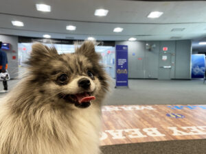 Flying with a Small Dog in Cabin - Dog at the Airport