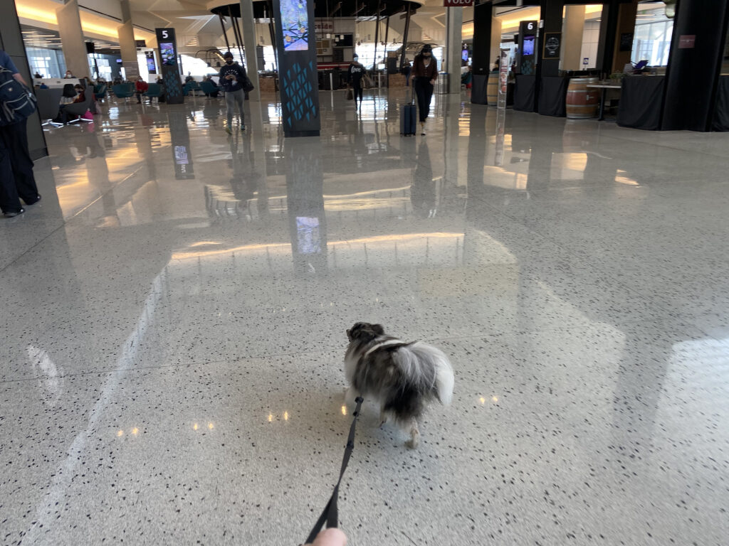 dog walking at the airport
