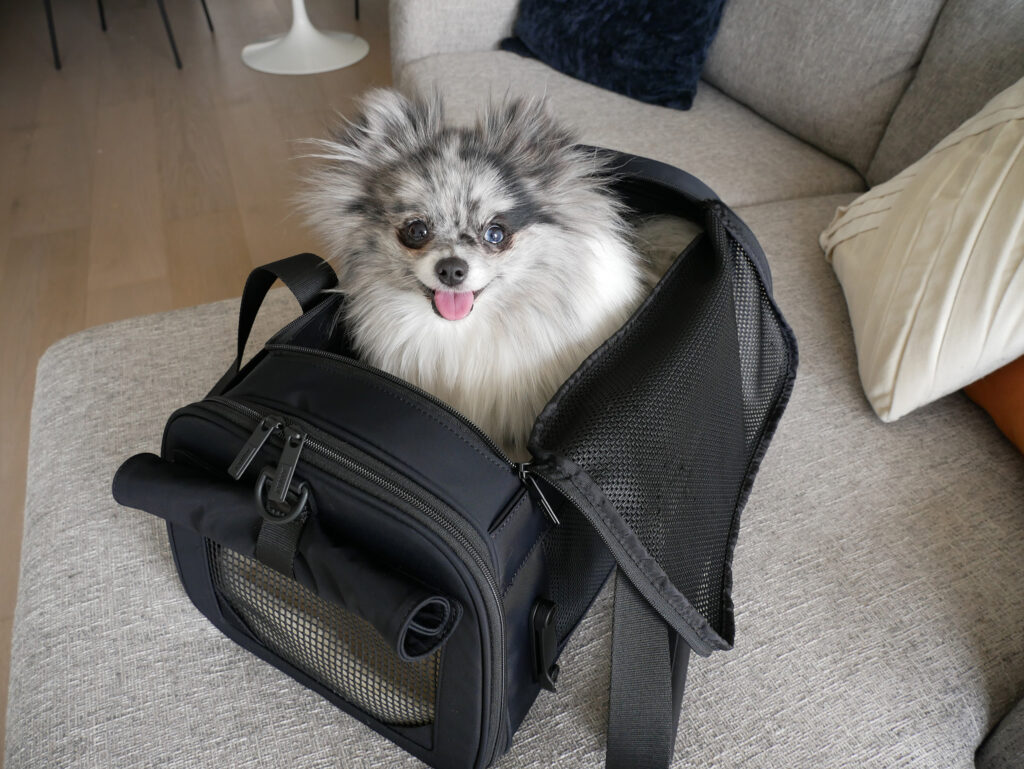 Away Pet Carrier Review