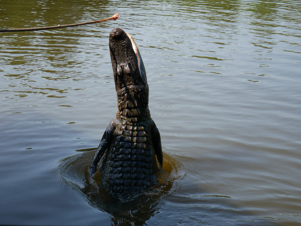 Swamp Tour New Orleans - things to do in New Orleans