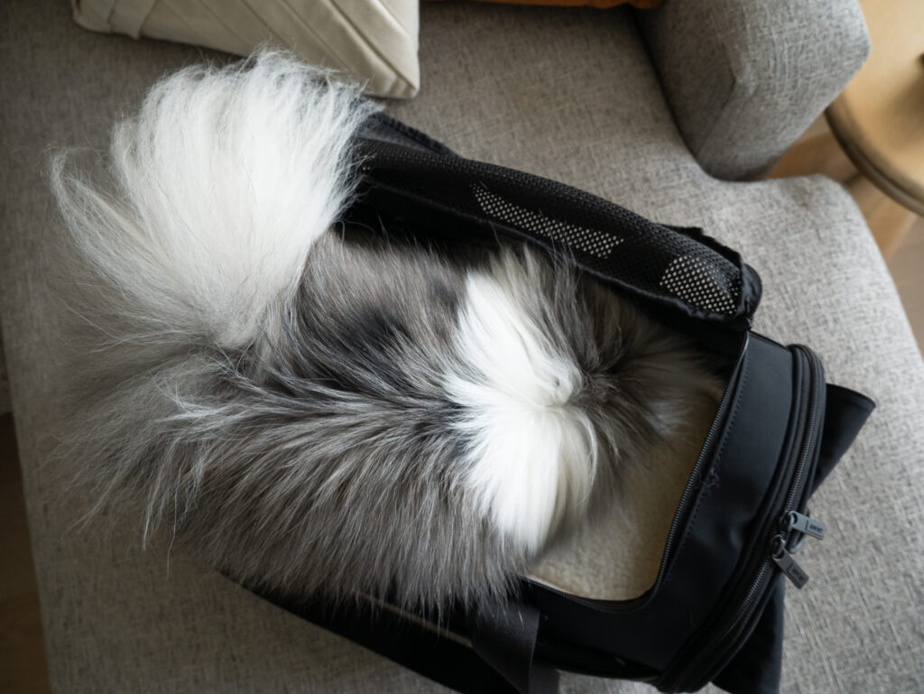 The Pet Carrier Away Review